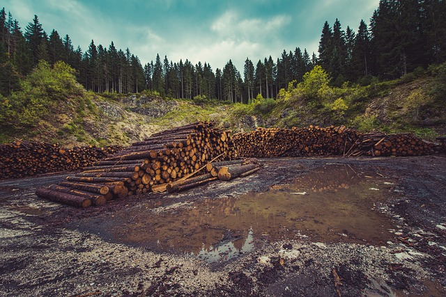 forestry-960806_640