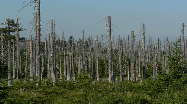 Efectos de la lluvia ácida en los bosques