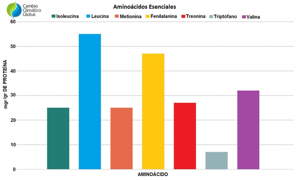 Aminoácidos esenciales en las proteinas