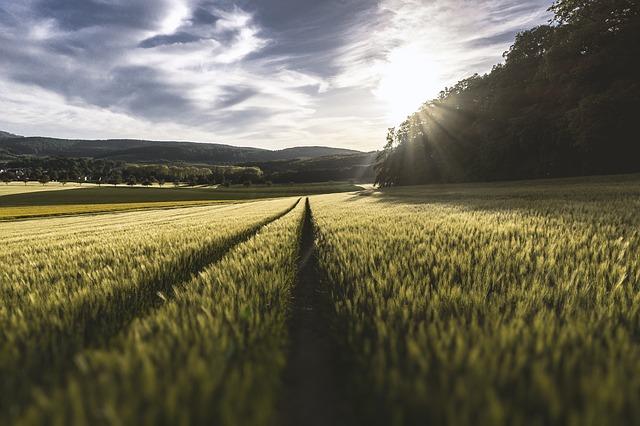 Campos de cultivos de cereales